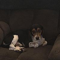 Adopt A Pet :: Arlington - cicero, NY