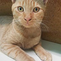 Adopt A Pet :: Ferdi - McPherson, KS