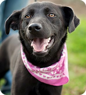 Labrador Retriever Mix Dog for adoption in Portsmouth, Rhode Island - Esmeralda