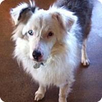 Adopt A Pet :: Taylor - Post Falls, ID