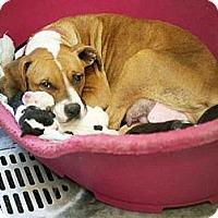 Adopt A Pet :: Rebecca & pups - URGENT!! - Seattle, WA