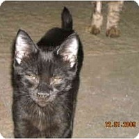 Adopt A Pet :: Faith - Riverside, RI