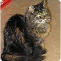 Adopt A Pet :: Lady Sophia - Warren, MI