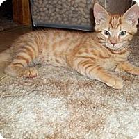 Adopt A Pet :: Citrine - Acme, PA