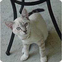 Adopt A Pet :: Sabrina - Franklin, NC
