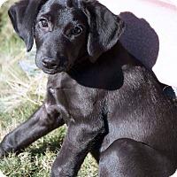 Adopt A Pet :: DRAKE - Fort Worth, TX