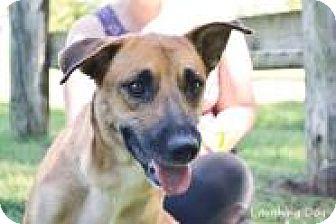 Shepherd (Unknown Type) Mix Dog for adoption in Stillwater, Oklahoma - Kaleesi
