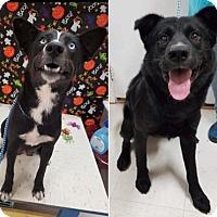 Adopt A Pet :: Boos Mom and Dad - Pompton Lakes, NJ
