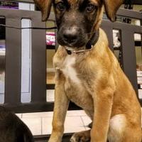 Adopt A Pet :: Jeffery - New Smyrna beach, FL