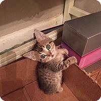 Adopt A Pet :: Fritz 17-0111 - Richardson, TX