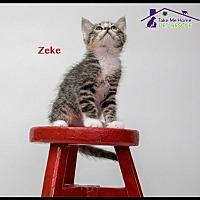 Adopt A Pet :: Zeke - Richardson, TX