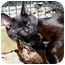 Photo 2 - Domestic Shorthair Cat for adoption in Columbia, Maryland - Davey & Goliath