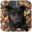 Photo 1 - Shepherd (Unknown Type) Mix Puppy for adoption in Phoenix, Oregon - Trixie