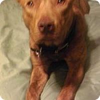 Adopt A Pet :: Riley - justin, TX