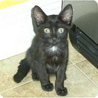 Adopt A Pet :: Cher - Mobile, AL