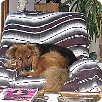 Adopt A Pet :: Rex - Courtesy Post - Vancouver, BC