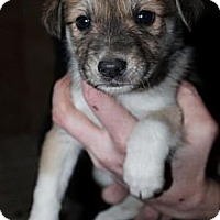 Adopt A Pet :: Prancer - Ogden, UT