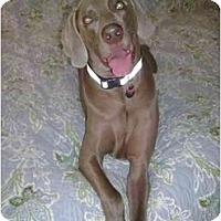 Adopt A Pet :: Greyson - Eustis, FL