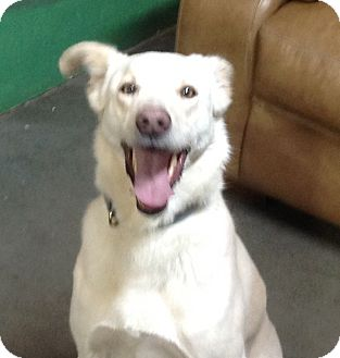 Shepherd (Unknown Type) Mix Dog for adoption in Meridian, Idaho - Nevada