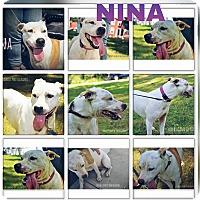Adopt A Pet :: Nina - ROME, NY