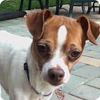 Adopt A Pet :: Geoffrey - San Francisco, CA