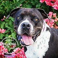 Adopt A Pet :: ELEANOR - Chandler, AZ