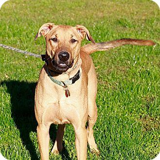 Shepherd (Unknown Type)/Hound (Unknown Type) Mix Dog for adoption in Sacramento, California - Orly!