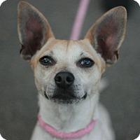 Adopt A Pet :: Cynthia - Canoga Park, CA