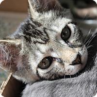 Adopt A Pet :: Ezra - Medina, OH