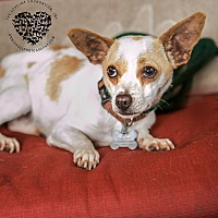Adopt A Pet :: Zipper - Inglewood, CA