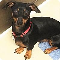 Adopt A Pet :: Jett - Decatur, GA