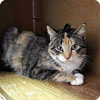 Adopt A Pet :: Pink - West Des Moines, IA