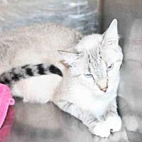 Adopt A Pet :: *LOUISIANA* - Salt Lake City, UT