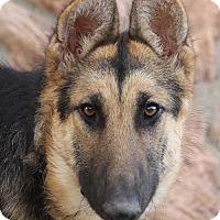 Adopt A Pet :: Elvis von Eldrich - Los Angeles, CA
