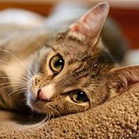 Adopt A Pet :: Riri - Edmonton, AB