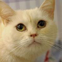 Adopt A Pet :: Sunset - Huntingdon, PA