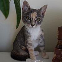 Adopt A Pet :: Toro - Highland Park, NJ