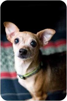 Chihuahua Mix Dog for adoption in Portland, Oregon - Mami