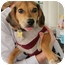 Photo 1 - Beagle Mix Puppy for adoption in Richmond, Virginia - Princess