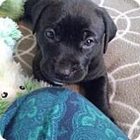 Adopt A Pet :: Pepper - Marlton, NJ
