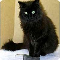 Adopt A Pet :: Jackson (Handsome!) - Portland, OR