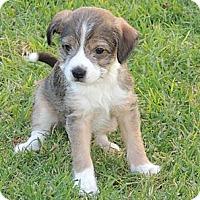 Adopt A Pet :: Dylan - La Habra Heights, CA