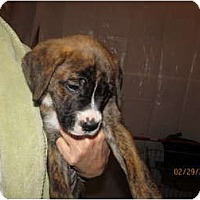 Adopt A Pet :: Tyson & Terri - CHESTERFIELD, MI