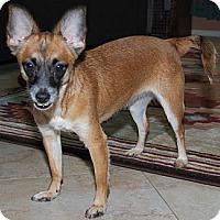 Adopt A Pet :: Kashi - Phoenix, AZ