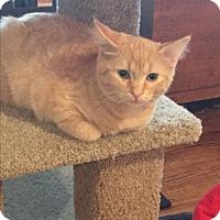 Adopt A Pet :: Dixie - Kelso/Longview, WA