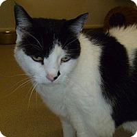 Adopt A Pet :: Delilah - Hamburg, NY