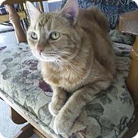 Adopt A Pet :: Princess Lilo - Laguna Woods, CA