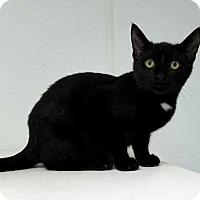 Adopt A Pet :: Tucker - Manteo, NC