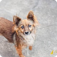 Adopt A Pet :: Punky - Pittsburgh, PA