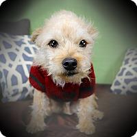 Adopt A Pet :: CHIP (video) - Los Angeles, CA